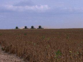 Produtores da fronteira agrícola entre a Bahia e o Piauí sofrem com a seca - Os pés de soja ficaram baixos e os grãos menores do que deveriam. Agricultores vão calcular as perdas nas lavouras para renegociar as dívidas.