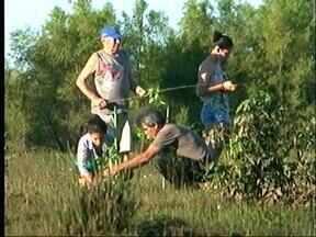 Crianças de Uruguaiana, RS, cultivam hábitos de preservação do Meio Ambiente - Cerca de 20 crianças de seis a 14 anos do Bairro Marcarenhas de Moraes aproveitaram o feriado para plantar mudas de árvores nativas às margens do Rio Uruguai.