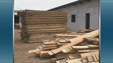 Ibama fecha serraria em Manacapuru - Uma serraria foi fechada na cidade de Manacapuru. No local, foram apreedidos 60 metros cúbicos de madeira.