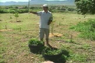 Produtores rurais da região da Borborema vão participar de curso em campo na Paraíba - Serão ensinadas várias técnicas, entre elas, a de convivência com a seca.