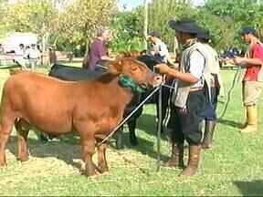 Termina amanhã a 11ª edição da Expo-Outono em Uruguaiana, RS - A tarde de hoje foi marcada por julgamentos de animais.
