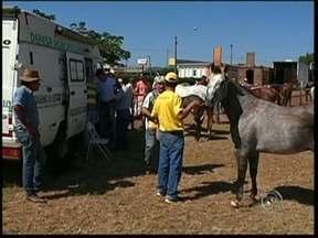 Aproximadamente 600 cavalos já deixaram o recinto de Avaré, SP - Até o fim da manhã desta quinta-feira (2), aproximadamente 600 cavalos já tinham sido retirados do Parque de Exposições Fernando Cruz Pimentel em Avaré (SP).