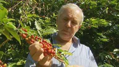 Queda na safra do café preocupa comerciantes em Cabo Verde - Queda na safra do café preocupa comerciantes em Cabo Verde