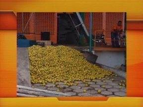 Comerciantes da Ceapi são flagrados desperdiçando alimentos ainda em boas condições - Comerciantes da Ceapi são flagrados desperdiçando alimentos ainda em boas condições