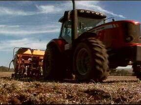 Após a colheita do soja, muitos agricultores investem na canola - A cultura ganha espaço nas lavouras do RS.