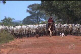 Meu MS apresenta videoclipe feito em homenagem à Mato Grosso do Sul - A música é de autoria de um douradense de coração, Dito Freitas. Confira agora o videoclipe que o Meu MS preparou da música 'Meu Mato Grosso do Sul'.