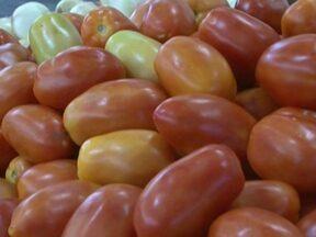 Produtores de tomate de Barreiras se preparam para enfrentar a concorrência - O tomate está vindo de várias partes do Brasil.