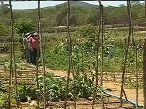 Agricultores de Pernambuco produzem alimentos com métodos simples mesmo com seca - No interior de Pernambuco, pequenos agricultores têm conseguido produzir alimentos se utilizando de métodos simples, mesmo em meio a uma das maiores secas da história. Conheça como isso é feito.