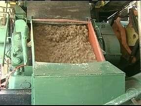Tempo seco colabora para a colheita da cana-de-açúcar em São Paulo - O clima tem contribuído com usinas e agricultores. O tempo seco facilita a entrada das máquinas nos canaviais. O trabalho nas usinas do estado está em ritmo acelerado e a produção com boa qualidade.