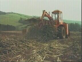 Projeto de lei autoriza plantio de cana de açúcar na Amazônia - Atividade está suspensa desde 2009 por um decreto presidencial