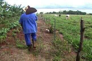 Crack vicia trabalhadores nas lavouras de Mato Grosso do Sul - Droga circula com facilidade e é entregue até nas porteiras das fazendas.