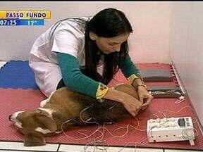 Técnica de acupuntura é utilizada no tratamento de saúde de animais - Sessões de acupuntura dão resultados positivos na saúde dos bichinhos.