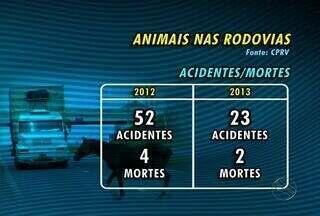 Número de animais apreendidos nas pistas de Sergipe aumentaram - Esses animais são responsáveis por alguns acidentes.