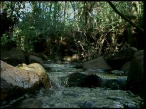Preservação Ambiental - Um projeto de uma escola de Santa Rosa que existe ha 20 anos começa mostrar resultados.