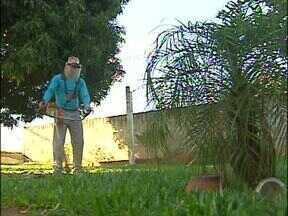 Ele ganha dinheiro limpando o quintal dos vizinhos - É um dos destaques do Paraná TV comunidade de hoje.