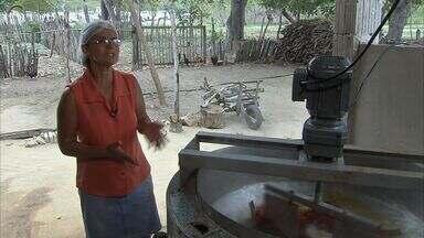 Em Barreira, agricultores se ocupam com o caju no período de estiagem - Confira como ocorre a produção do fruto.
