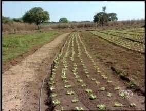 Tempo seco no estado favorece a produção de hortaliças - Tempo seco no estado favorece a produção de hortaliças