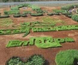 Embrapa desenvolve projeto 'Vitrine de tecnologia' - Espaço reúne arte, pesquisa, educação e meio ambiente.