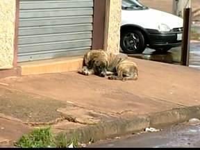 Medidas podem ajudar a resolver problemas de animais abandonados em Uberaba - A quantidade de cães e gatos nas ruas de Uberaba impressiona, e o abandono é um problema sem solução. A principal causa é a irresponsabilidade das pessoas que mudam de ideia depois de adotar um bichinho de estimação.