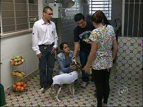 Clodoaldo, cãozinho que foi vítima de maus tratos, volta aos antigos donos - Um dia depois de ONG anunciar que procurava dono para Clodoaldo, ele foi reencontrado pelos antigos donos, de quem foi roubado pela pessoal que o maltratou.