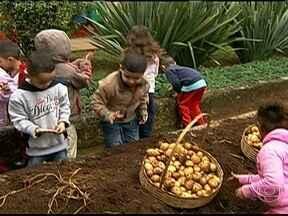 ONG de São Paulo incentiva prática da agricultura entre crianças dentro da Ceagesp - Uma ONG de São Paulo quer incentivar a prática da agricultura desde cedo. A entidade atende cerca de 300 crianças e adolescentes dentro da Ceagesp. Acompanhe o resultado da primeira plantação de batatas feita por esta turma.