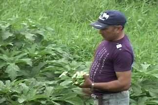 Veja como um agricultor familiar triplicou a renda com plantio do quiabo em Coremas, PB - Confira no Paraíba Rural desta semana.
