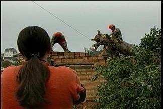 Instabilidade climática causa estragos - O vento forte destelhou casas e derrubou árvores em Passo Fundo