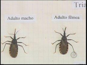Programa promove ação de combate ao inseto transmissor da doença de Chagas em Araçatuba - Uma ação de combate ao inseto barbeiro, que transmite a doença de Chagas, está sendo realizada em Araçatuba (SP). Confira como o trabalho está sendo feito na cidade.