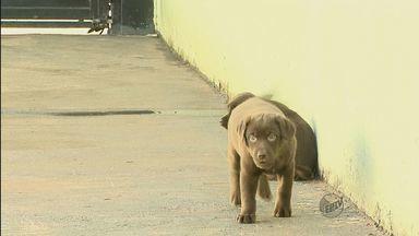 Ladrões invadem chácara e levam 39 cães de raça em Ribeirão Preto, SP - Ladrões invadem chácara e levam 39 cães de raça em Ribeirão Preto, SP.