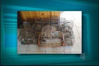 Polícia Ambiental apreende espingardas e vários pássaros em Santa Isabel - A apreensão foi durante uma operação da Polícia Ambiental nesta sexta-feira (6). Foram encontradas três espingardas calibre 36 e vários pássaros silvestres. O homem foi levado para a delegacia do município.