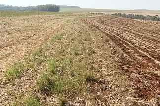Milho perde espaço para soja entre produtores do Paraná - Os produtores vão iniciar nos próximos dias o plantio da safra de verão. Há dois motivos para a queda do milho: o preço, que não está satisfatório, e o alto custo de produção.
