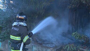 Árvore centenária é incendiada em Ribeirão Preto - No Dia da Árvore, comemorado neste sábado (21), uma seringueira centenária foi incendiada no bairro Alto da Boa Vista. Os bombeiros dizem acreditar que o fogo tenha sido criminoso.