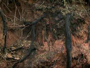 Árvores que ameaçam cair na Zona Sul preocupam moradores - Árvores estão com as raízes expostas e podem cair a qualquer momento. Dr. Árvore responde dúvidas sobre o assunto no SPTV.
