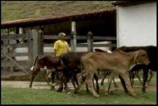 Regulamentação da profissão de vaqueiro gera benefícios ao profissional - Lei foi aprovada em setembro e trabalhadores do Leste de Minas que lidam com gado, recebem curso de graça para se qualificarem na função.