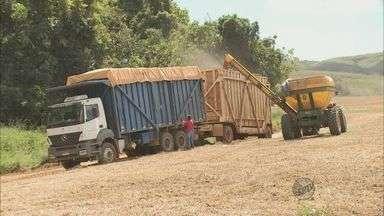 Começa o plantio de soja em Delfinópolis (MG) - Começa o plantio de soja em Delfinópolis (MG)