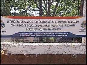 Animais recolhidos em Araçatuba são levados para outros zoológicos - Há mais de um ano fechado para reforma, o zoológico de Araçatuba (SP) não recebe mais animais recolhidos nas áreas urbanas ou então recuperados de queimadas, por exemplo. Os animais capturados são levados para outras cidades do Estado.