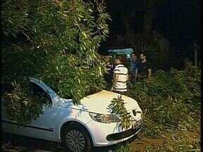 Vendaval derruba árvores e causa estragos em Maringá - Vento chegou a 75 quilômetros por hora