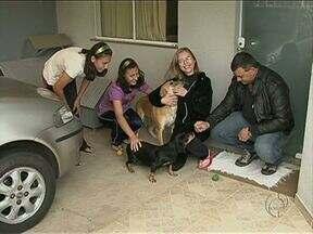 Vigilância Sanitária proíbe família de alimentar animais de rua em Guarapuava - Os moradores não concordam com a determinação. O canil municipal deveria ter sido reformado este ano. Mas até agora nada foi feito.