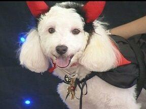 Cães participam de desfile do dia das bruxas - A comemoração antecipada do Halloween teve direito a desfiles e fantasias bem originais. Os cachorros foram a principal atração, mas as crianças também aproveitaram para se fantasiar.