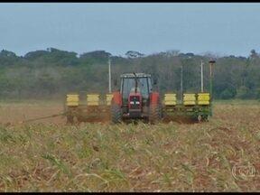 Chuva atrasa o plantio da soja em Mato Grosso - Como a chuva demorou, o plantio da soja em Mato Grosso teve um início mais lento nesta safra.