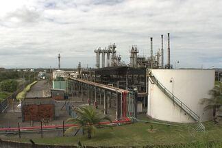 Polo industrial de Camaçari une progresso com responsabilidade ecológica - Ao redor de tantas empresas existe um anel florestal que se tornou tão importante quanto o desenvolvimento industrial.