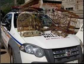 Polícia Militar de Meio Ambiente apreende 17 pássaros silvestres em Timóteo - Duas pessoas foram encaminhadas a delegacia.