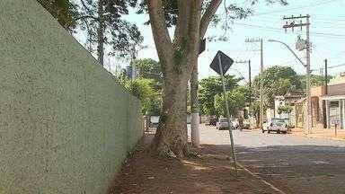 Ventos fortes e chuvas geram riscos a árvores em Ribeirão Preto, SP - Falta de manutenção agrava o problema.