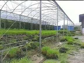 Grupo do MST destrói laboratórios da Universidade Federal de Alagoas - Os vândalos usaram foices para acabar com uma pesquisa de quase um ano para o desenvolvimenro de novas variedades de cana de açúcar.