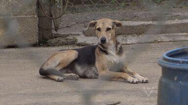Animais são vítimas de abandono em Itanhaém, SP - Bichos são deixados pelos donos nas ruas e não são recolhidos pela prefeitura. Município não possui um centro de zoonoses.