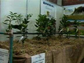Agroecologia e produção de frutas têm espaço na Frinape de Erechim, RS - Fruticultura e chás medicinais podem ser encontrados no evento.
