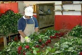 Em Nova Friburgo, RJ, produtores de flores esperam boas vendas no fim do ano - Este ano, a venda de flores durante o feriado de Finados não foi das melhores.