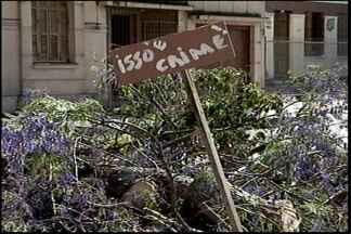 Uma cena que revoltou moradores - Jacarandá localizado no centro de Pelotas foi cortado