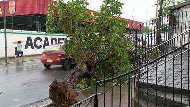 Chuva derruba árvores e alaga ruas em Juiz de Fora - Defesa Civil registrou queda de árvores no Progresso e no Santa Rita. Ruas do Centro e do Bandeirantes ficaram alagadas, segundo internautas.