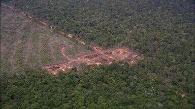 Ministra do Meio Ambiente anuncia medidas contra desmatamento ilegal - A ministra do Meio Ambiente, Izabela Teixeira, anunciou nesta sexta-feira (22) medidas de combate ao desmatamento ilegal, situação na qual Mato Grosso tem um dos piores resultados do país.